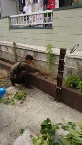 手作業により、地道に雑草を抜いていきます