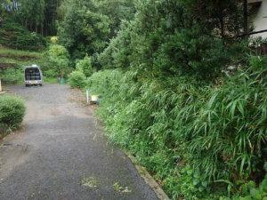 作業前。画像右側のお隣の敷地から侵入してきた笹竹