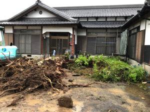伐採完了後、地中に残った根っこまで完全に除去