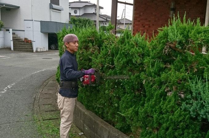始めに住宅を囲むカイズカイブキの生垣を刈り込んでいき、マキの木、ツゲの剪定を行いました。