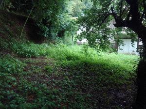 手前側には雑草はあまり生えていませんが奥には腰の高さまで成長した雑草も多くありました