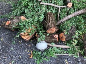 除去した枝葉の一部分。もし頭の上にでも落ちてきたらと思うとゾッとします