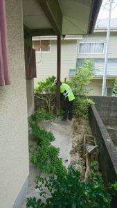 弊社では小さな木から見上げるような大木までどんな樹木でも対応可能です