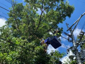 電線に被さる枝の剪定作業中の様子