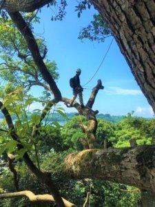 熊本での特殊伐採・剪定なら山猿へお任せください!