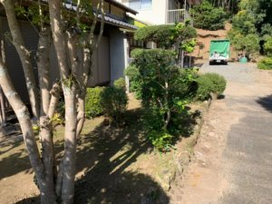 作業後。木の根元がハッキリ見える事で庭木も綺麗に見えますね!