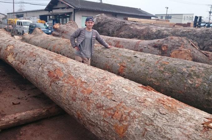 立木の買取り (銘木を買取りします)