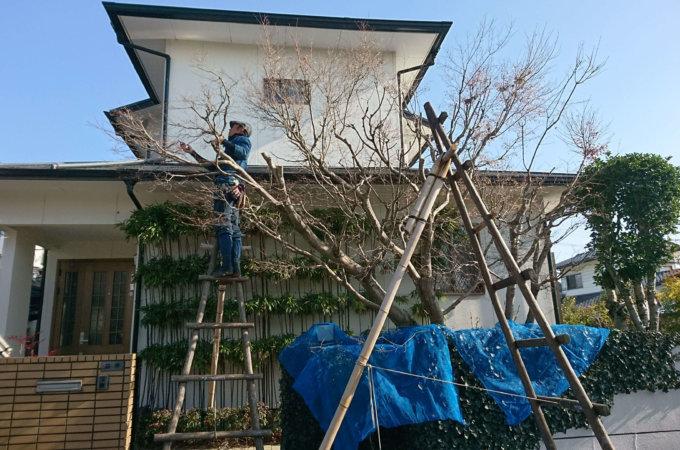 樹木の剪定 (庭木1本から大木まで)