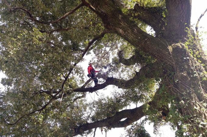 樹木調査 (枯れ枝危険枝の点検等)