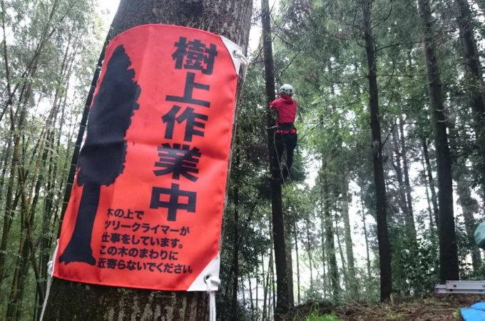 その他の樹木管理 (避雷針設置など)