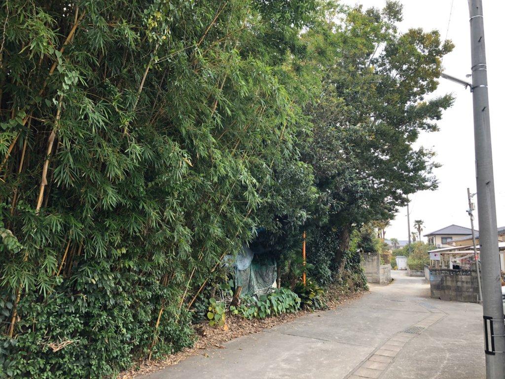 隣の敷地や家にまで枝を伸ばして、  覆いつくすように成長した木々。山猿スタッフも気合が入ります。