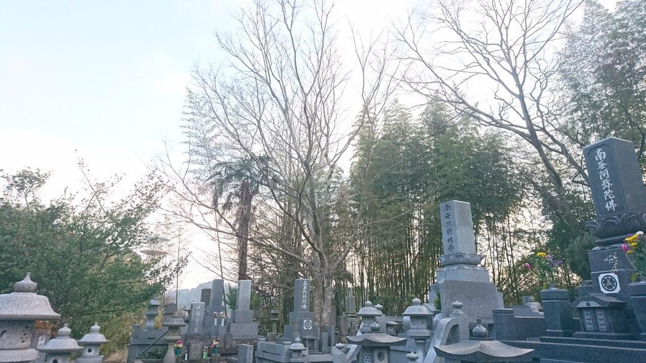 周りは全てお墓に囲まれているエノキ