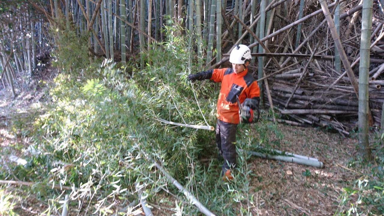 テキパキと伐開作業を進める田嶋