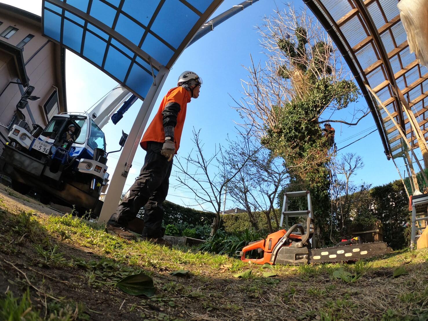 クレーン車の設置を終え、準備に入る郡(中央)、木に登りこむ田嶋(右)