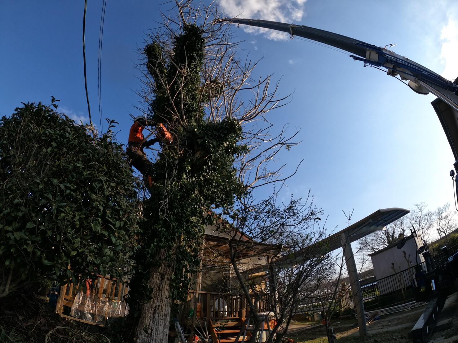 木の傾きや刃を入れている隙間を確認しながら作業を進める田嶋