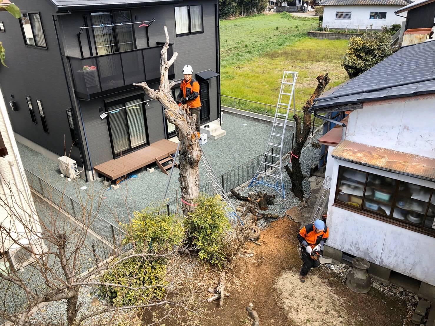 現場へ到着後、伐採木の最終確認を行い、早速作業開始。