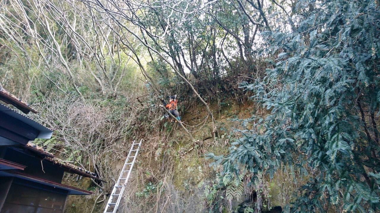 樹上作業員(田嶋)。壁面に取り付き、伐採を行っていきます。