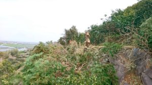 デコポンの木を傷めないように枝を小さく切りながら作業を進める田嶋