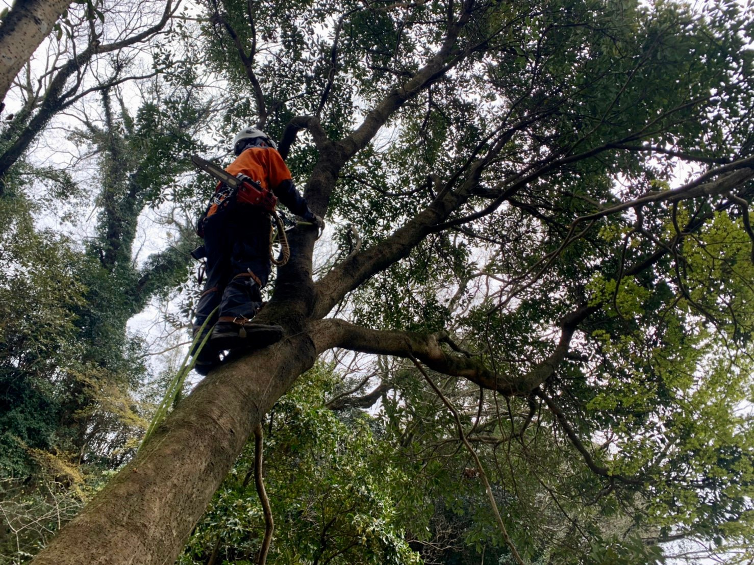 ミーティングを終え、木に登り始める郡。