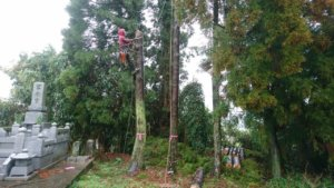 構造物へ傾いた木も弊社は問題なく対応致します
