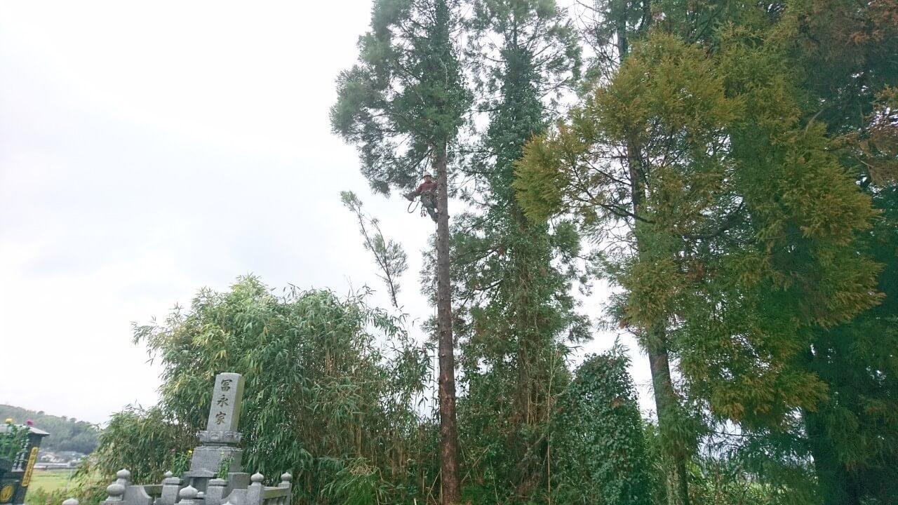 伐採を終え、枝打ちを行い作業は無事完了。