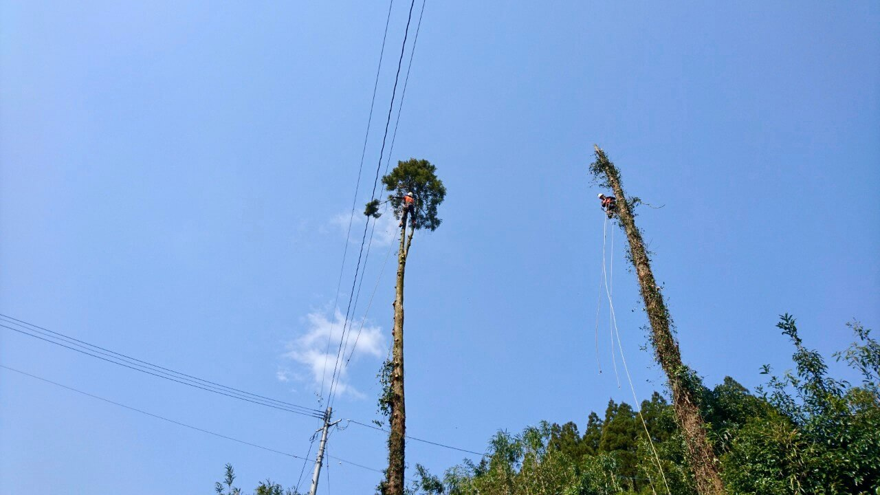 枝打ちも終わり、この後は上部から数回に分けて切り落とし、伐採を完了しました。