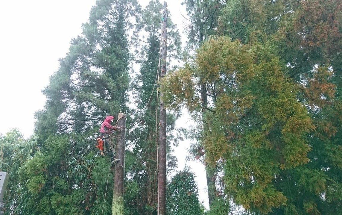 枝を切り落とした後はロープを使った吊り切りを行っていきます