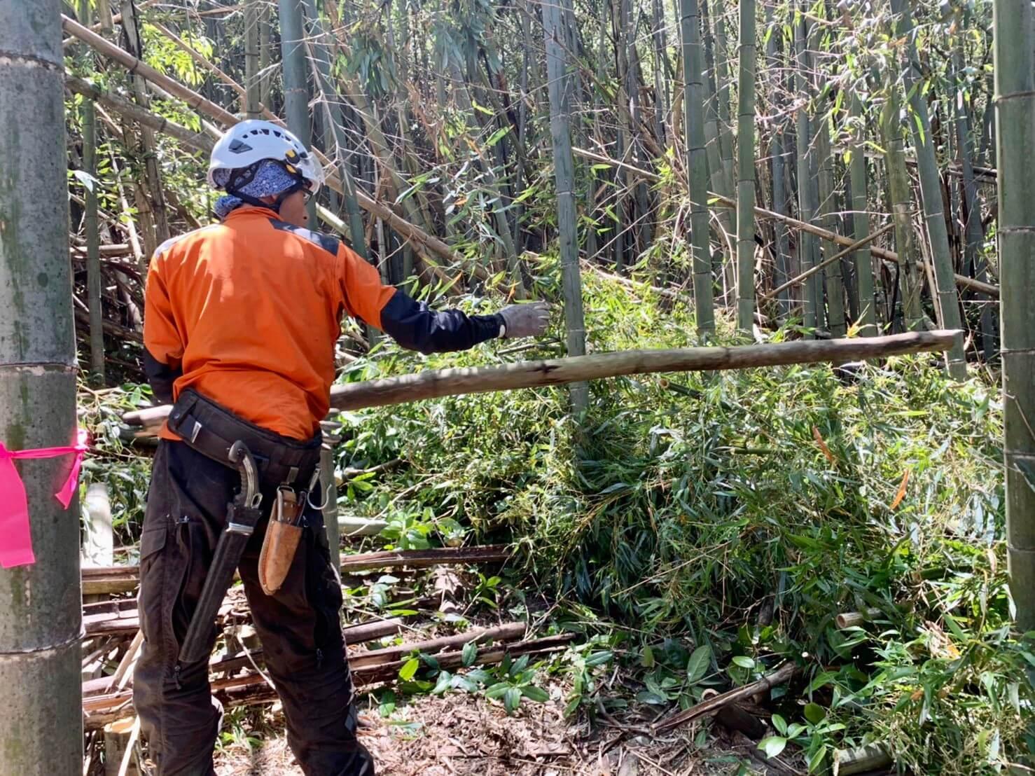 伐採は完了し、集材作業を行う郡