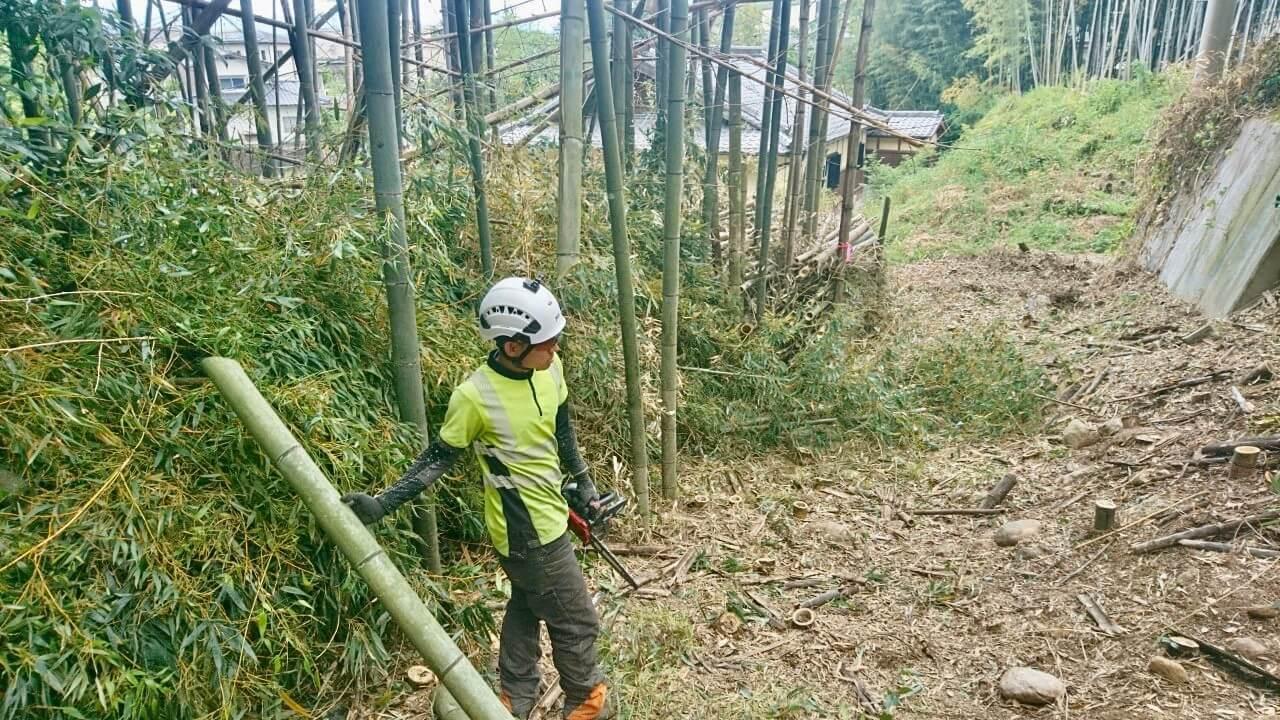 切った竹は現場に残置。綺麗に集材を行っていきます。