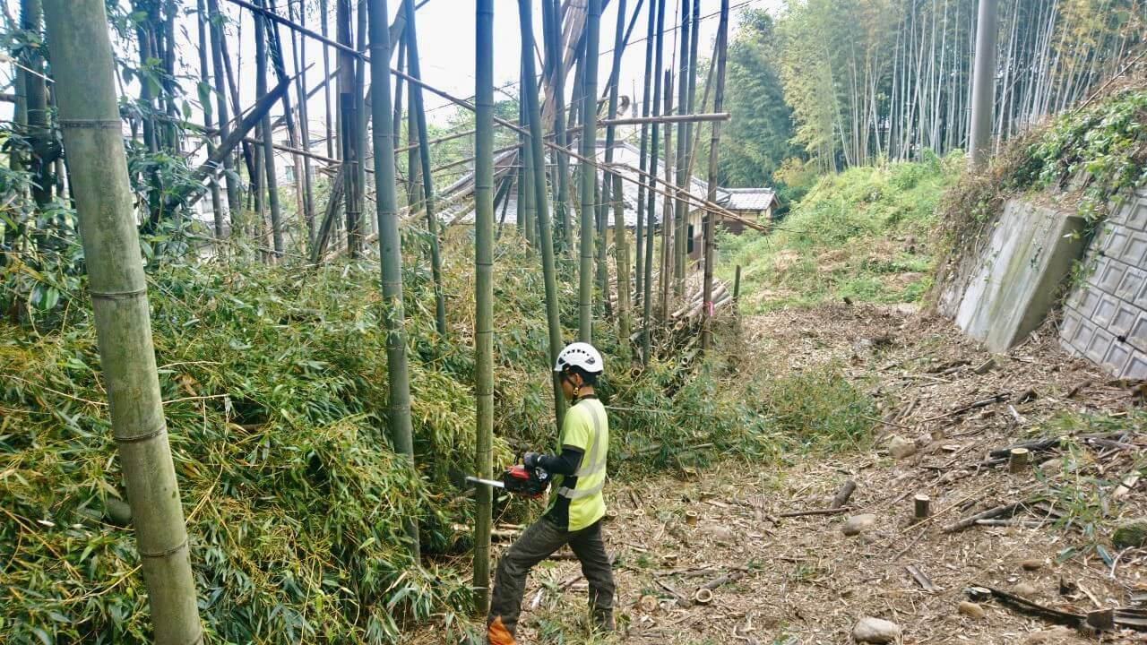 ここまでで約80mの伐採が完了。