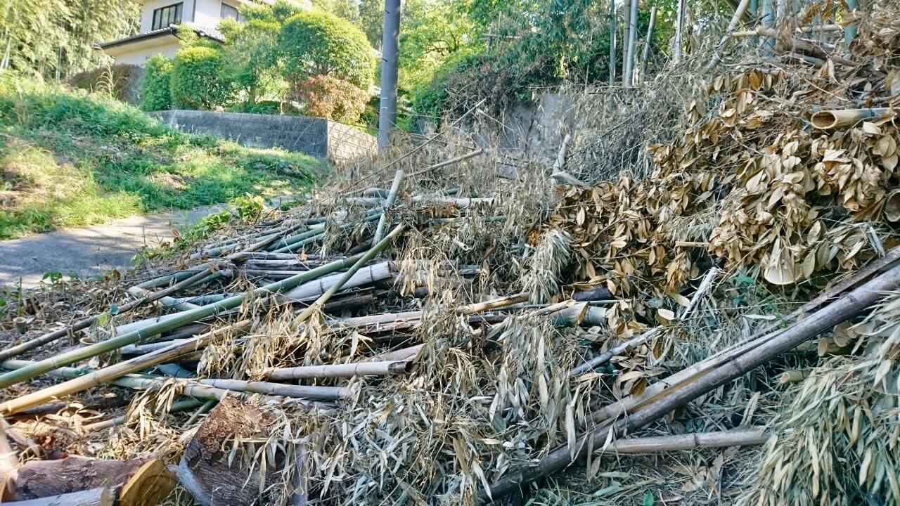 道路に面している面の伐採が終わった所。これから集材作業を行っていきます。