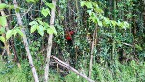 竹林の内側から伐採作業を始める代表山本。