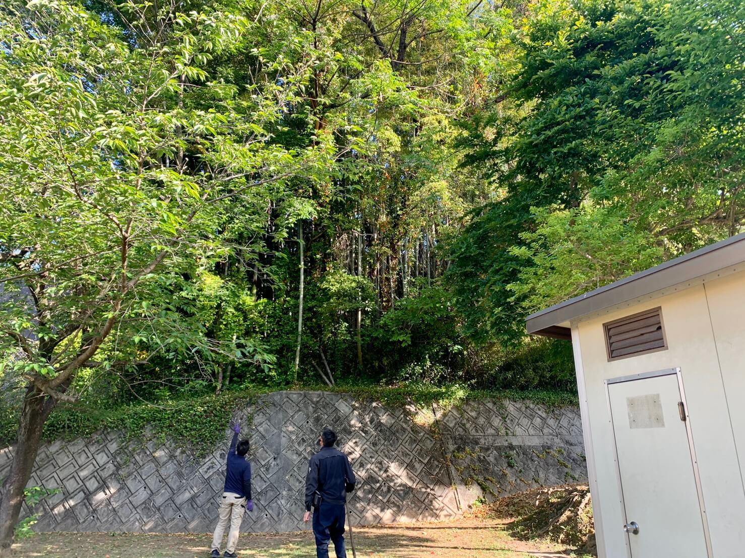 お隣の公園に大きく枝を伸ばしたセンダンやカシノキ等が立ち並びます