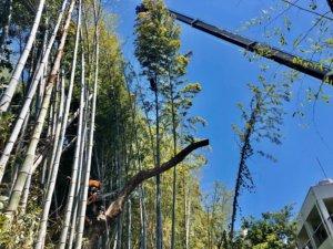 偏心した幹もクレーンとの共同作業により無事に根元で伐採完了。