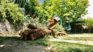 大きな幹や枝葉を一か所に集材。伐採が終わり次第、搬出を行います。