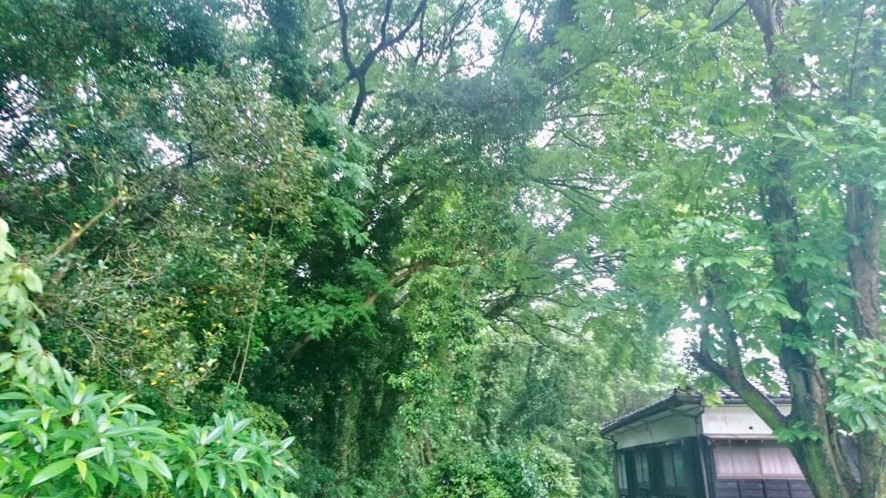 切り下げを行う、住宅側へ傾いた木々