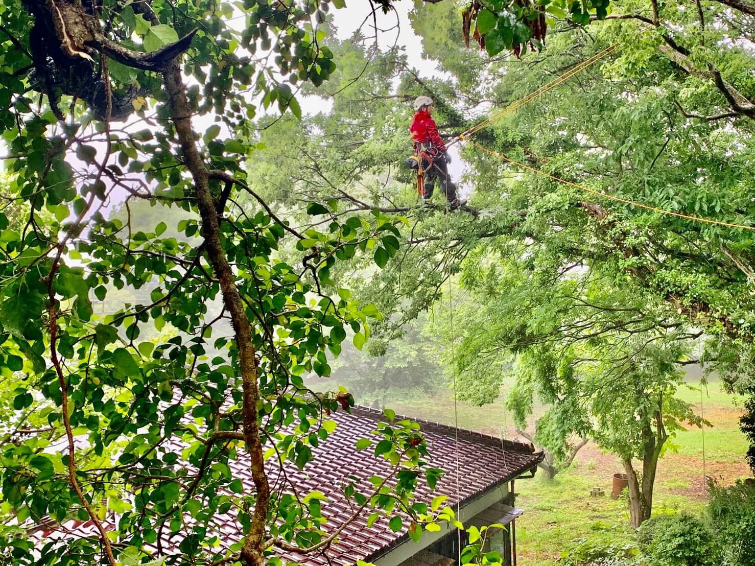 枝先へ登りこむ代表山本。