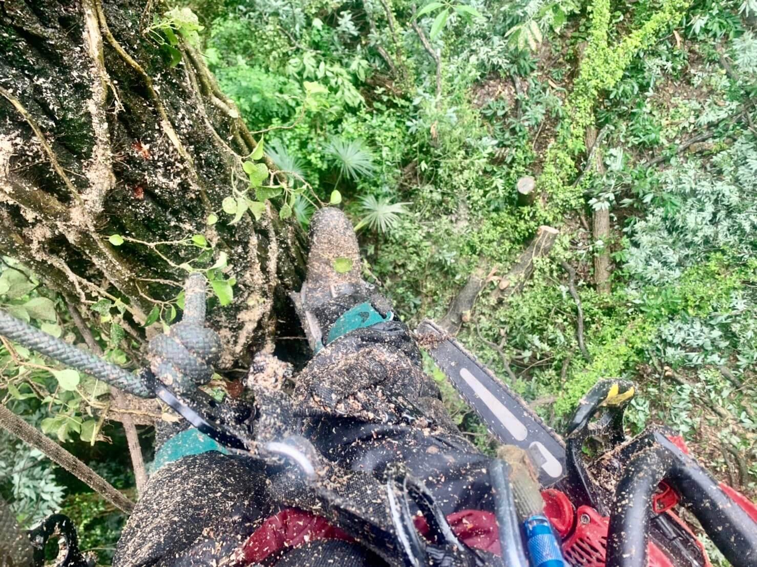クライマー田嶋の視点。幹にはカズラが巻き付き弱っている木も多くありました