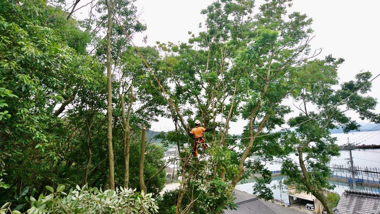 住宅に被さる木はロープを使って安全に伐採を行っていきます。