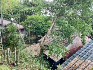 このように斜面から生え、住宅側へ傾いてしまった木もロープワークを使って伐採作業を行います