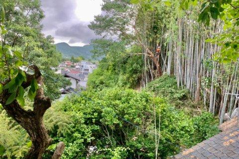 竹林の伐採後、雑木の伐採に移る代表山本
