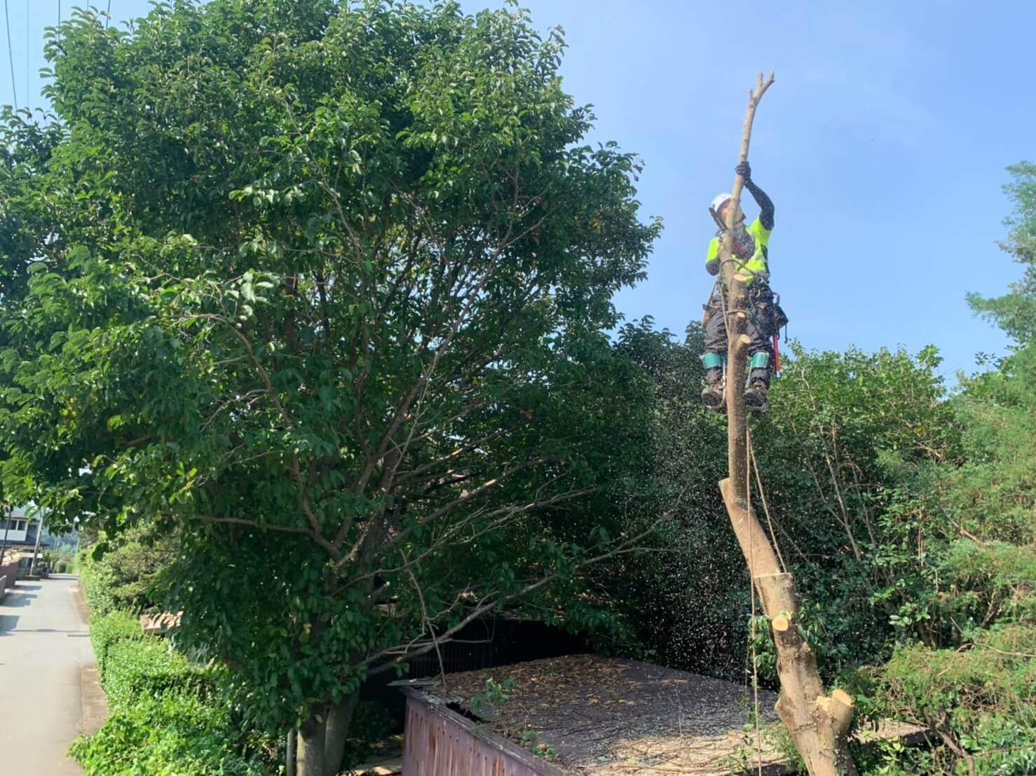 枝を落とした後は幹の断幹作業へ。