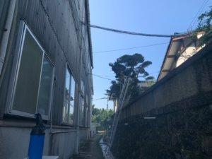 梯子のみでは剪定が難しい木もロープワークとの併用で難なく剪定を進める代表山本。