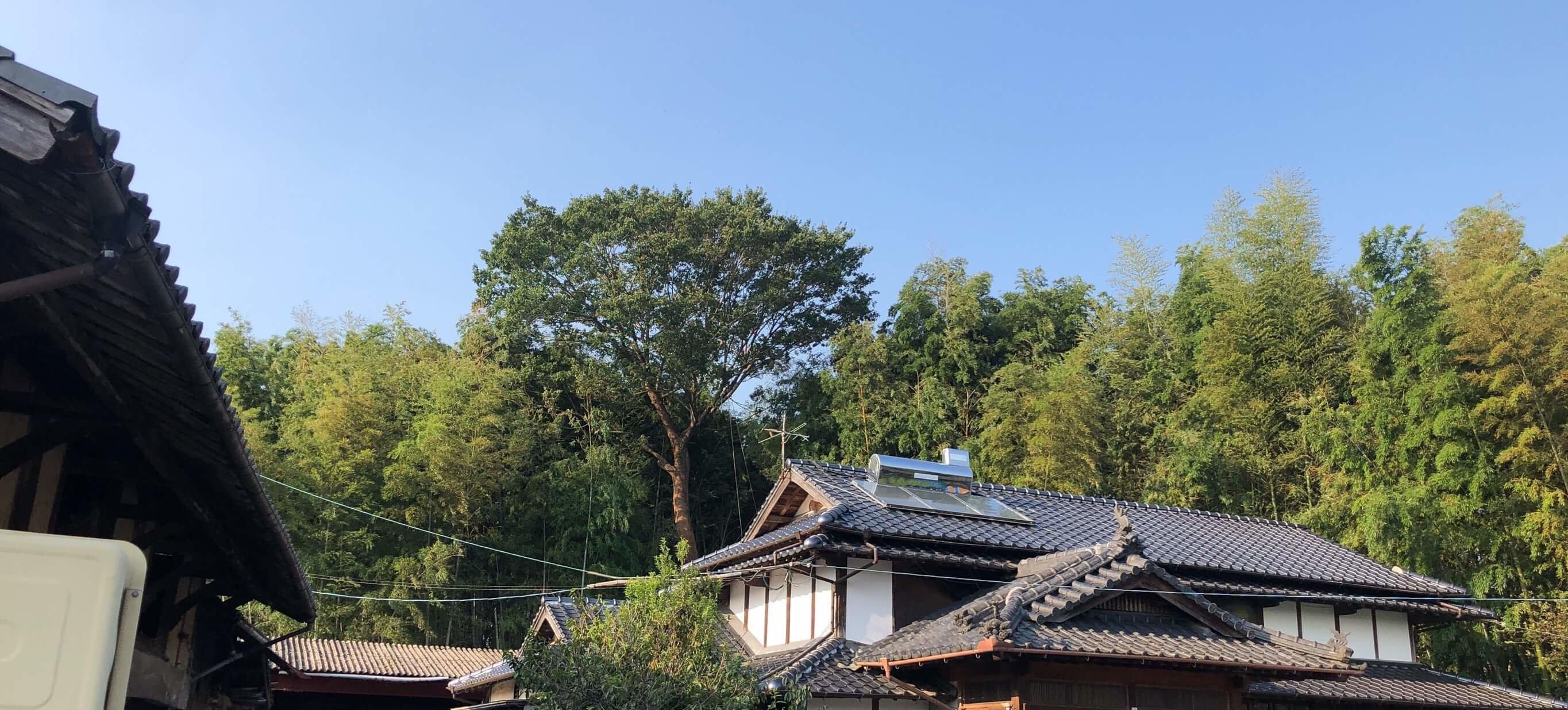 こちらは伐採を行うケヤキの木。住宅のすぐ裏にあり、二階建ての住宅をゆうに超える高さでした。