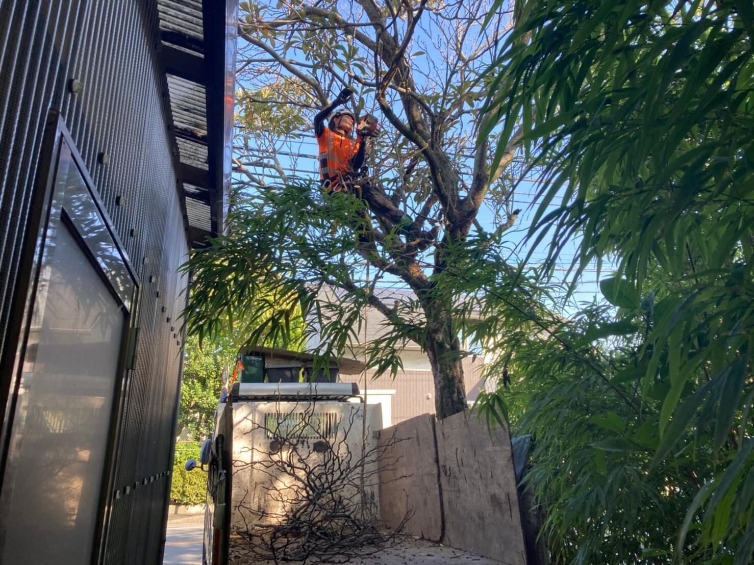 枯れ枝が多く、屋根やお隣の構造物に注意しながら伐採を進めていきます。