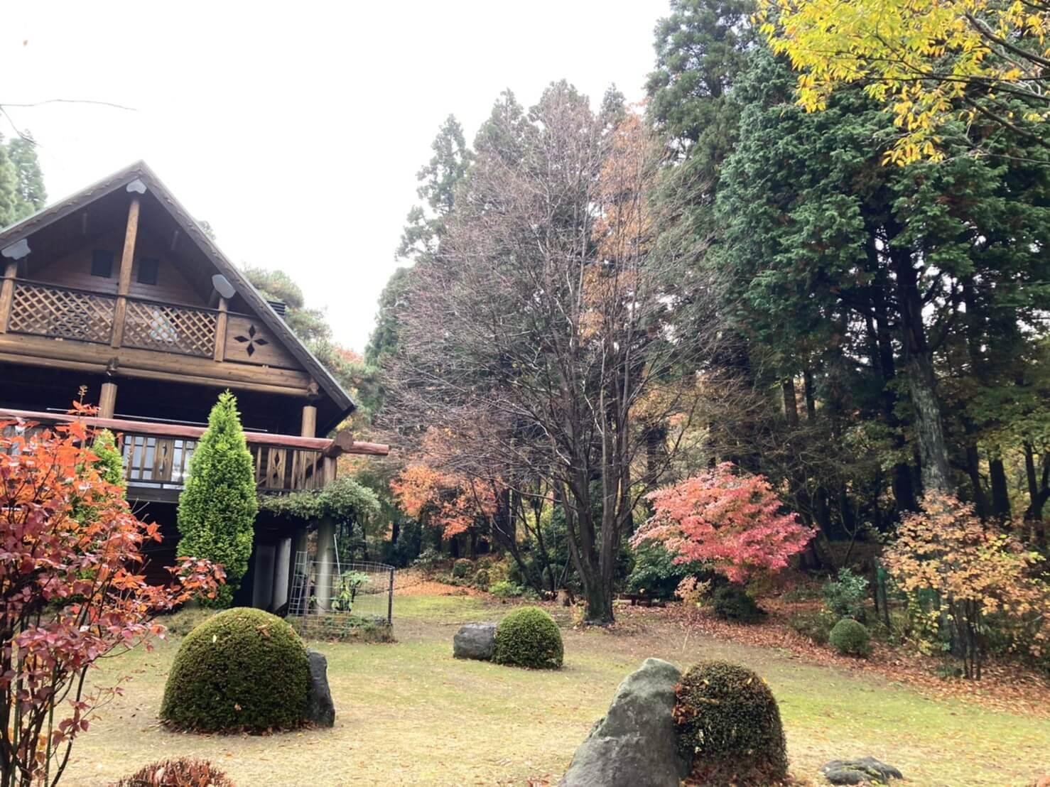 住宅右側にある大きなカツラの木。高さを三分の一程度下げて、剪定を行います。