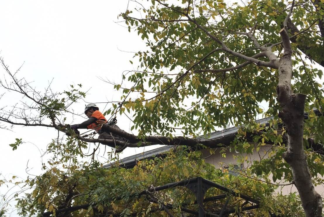 構造物の上に覆いかぶさっているような枝も山猿では問題なく対応致します。
