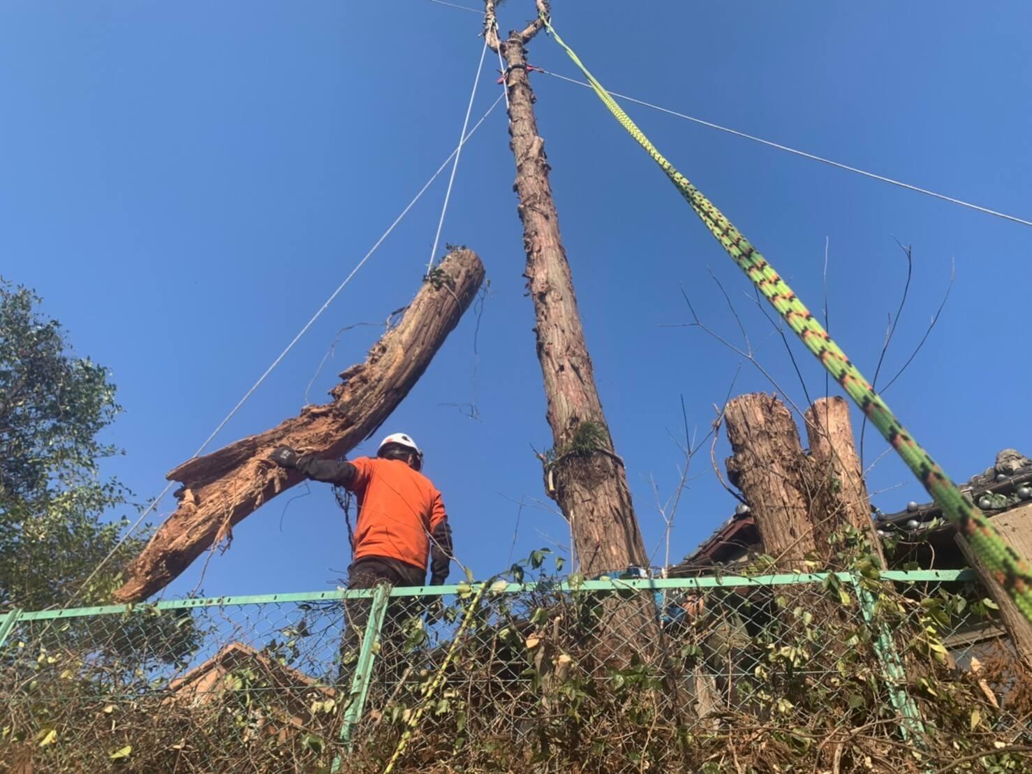 重い幹の部分をロープを使って集材している様子。