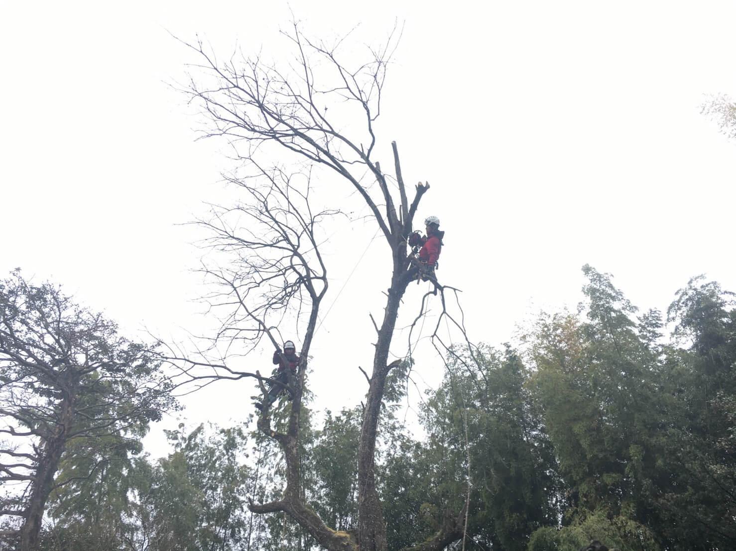 伐採作業を行うスタッフ藤本と田嶋。
