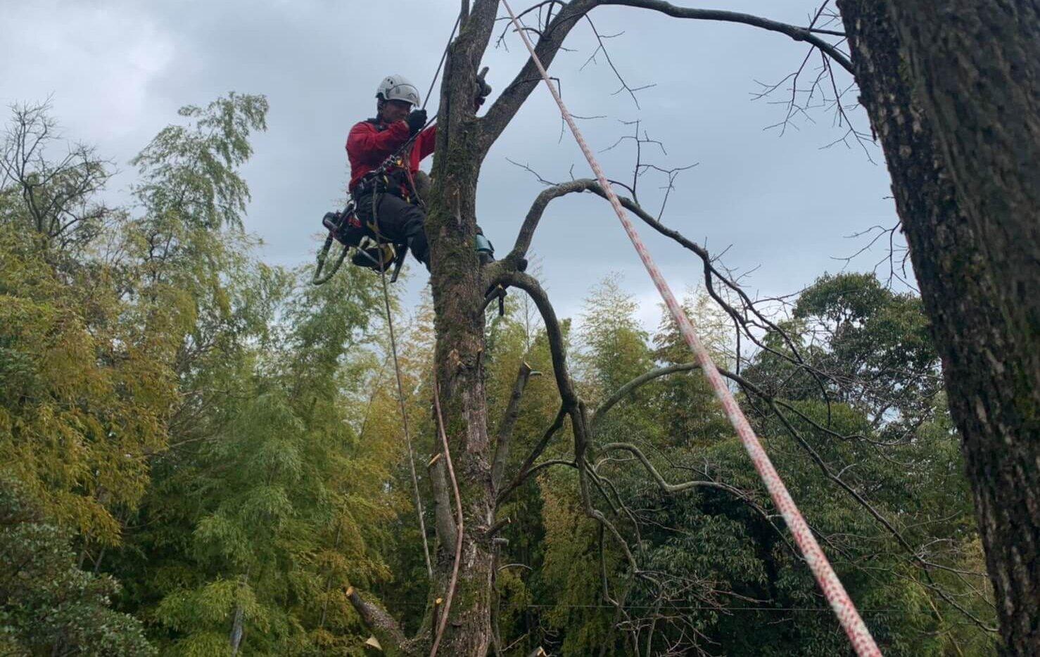 上部には枯れ枝も多く、細心の注意を払いながら作業を進めていきます。